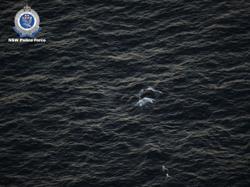 Australian police free entangled young whale off east coast