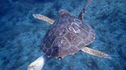World Ocean Day: Turtle clinic in Spain rescues turtles caught in fishing nets