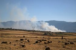 Israeli strikes kill eight fighters in Syria: monitor