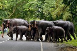 Elephants in India tested for coronavirus after rare lion's death