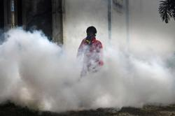 Indonesia dengue fever study offers hope in disease battle