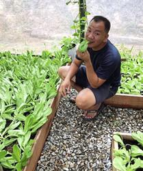 More Sabah youths turning to farming