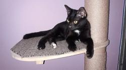 Katz Tales: Integrating a new kitten into the household (with older cats)