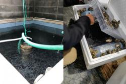 France breaks up eel smuggling ring serving Asia and heading for China and Thailand