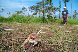 New batch of rat recruits ready to sniff out landmines