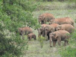 Elephants' trek in China unlikely linked to humans: experts