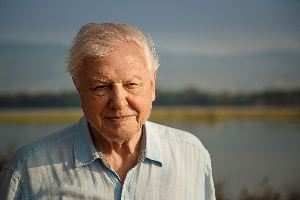 Attenborough wants world leaders to take swift action concerning climate change. Photo: Filepic