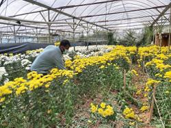 Farmers unable to get flowers to the market
