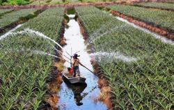 Vietnam drafts new policies to encourage investment in agriculture