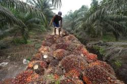 Palm oil heading for first daily gain after six-day losing streak