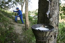 Malaysia's natural rubber production down by a third in April