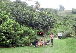 Malaysian urban dwellers 'reclaim' city land, one garden at a time