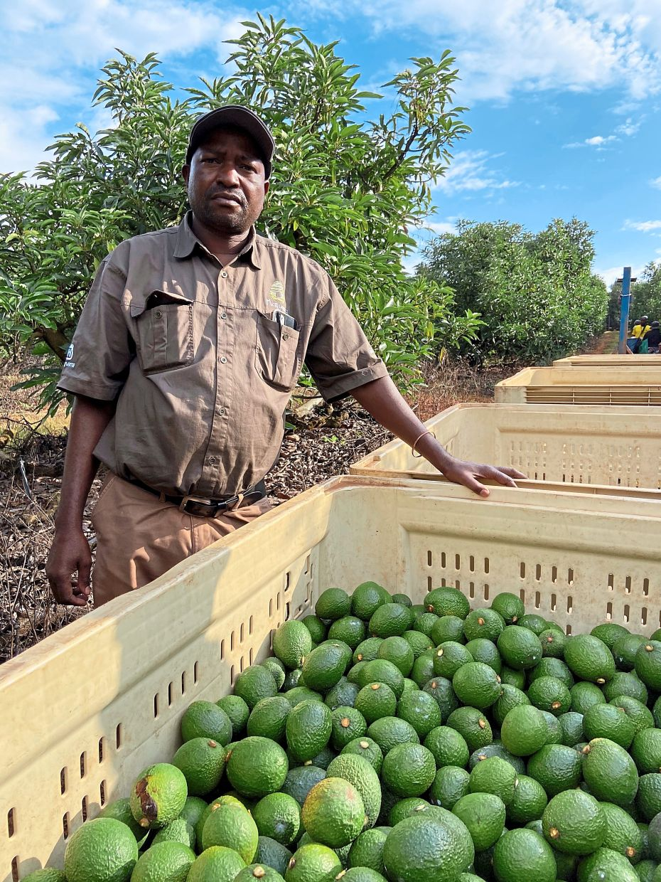 Kjashuane, a manager at the Allesbeste farm in South Africa, is on call around the clock to help stop criminal gangs from breaking onto the property and stealing the profitable avocado harvest growing there.