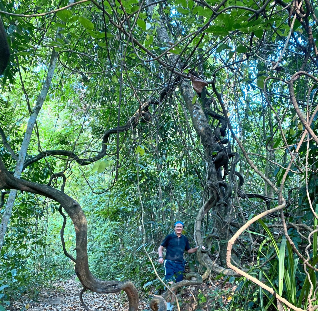 Bukit Kiara in Kuala Lumpur is a great place for folks who are looking for some physical challenge. — Photos: DR POLA SINGH