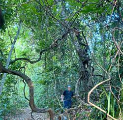 Malaysian hiker shares the joy of hiking in Bukit Kiara before MCO