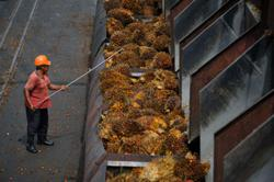 Palm oil price reverses gains as India puts import tax cut plans on hold