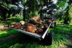 Palm oil reverses course to trade up 1% on stronger US soyoil