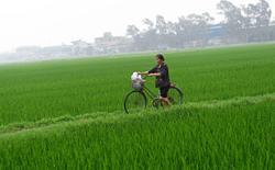 Vietnam targets US$41bil agriculture exports
