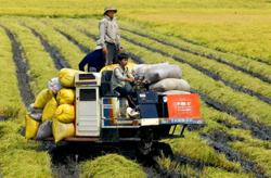 Vietnam targets big and aims for US$41bil in agriculture export this year
