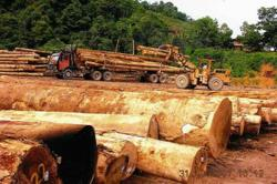 Sibu timber company claims over RM360,000 lost in alleged bank fraud