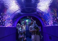 Melaka's Oceanarium facing losses, aquatic species may be auctioned off, says CEO