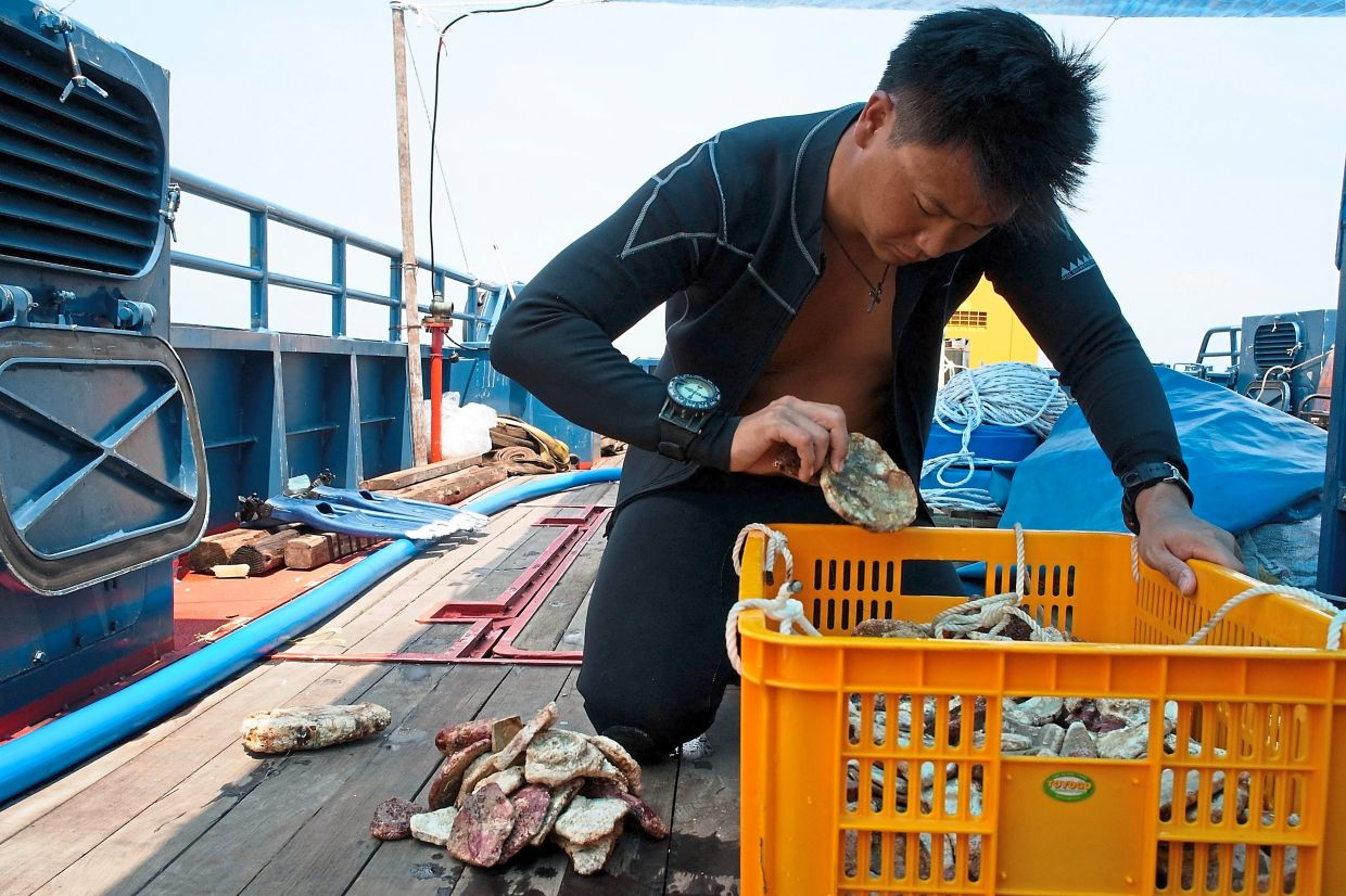 A diver sorting through finds discovered from a shipwreck off Pedra Branca. Photo: ISEAS – Yusof Ishak Institute/AFP