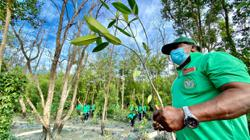 Can we reverse climate change by planting millions of trees?