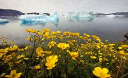 World Bank vows to keep board apprised of climate action progress