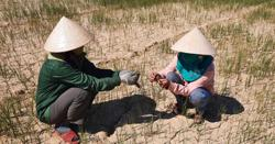 Vietnam most concerned with human rights in climate change context: UN envoy