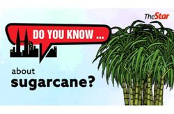 Do you know ... about sugarcane?