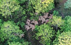 National park proposed for Yunnan's wild elephants