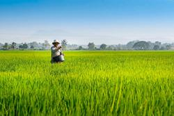 Agriculture sectors to continue operating throughout national recovery phases