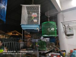 Beautiful plumage: Perhilitan seizes protected parrots, parakeets and a songbird in raid on house