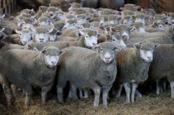 Late night breakthrough brings EU closer to deal on farm subsidies