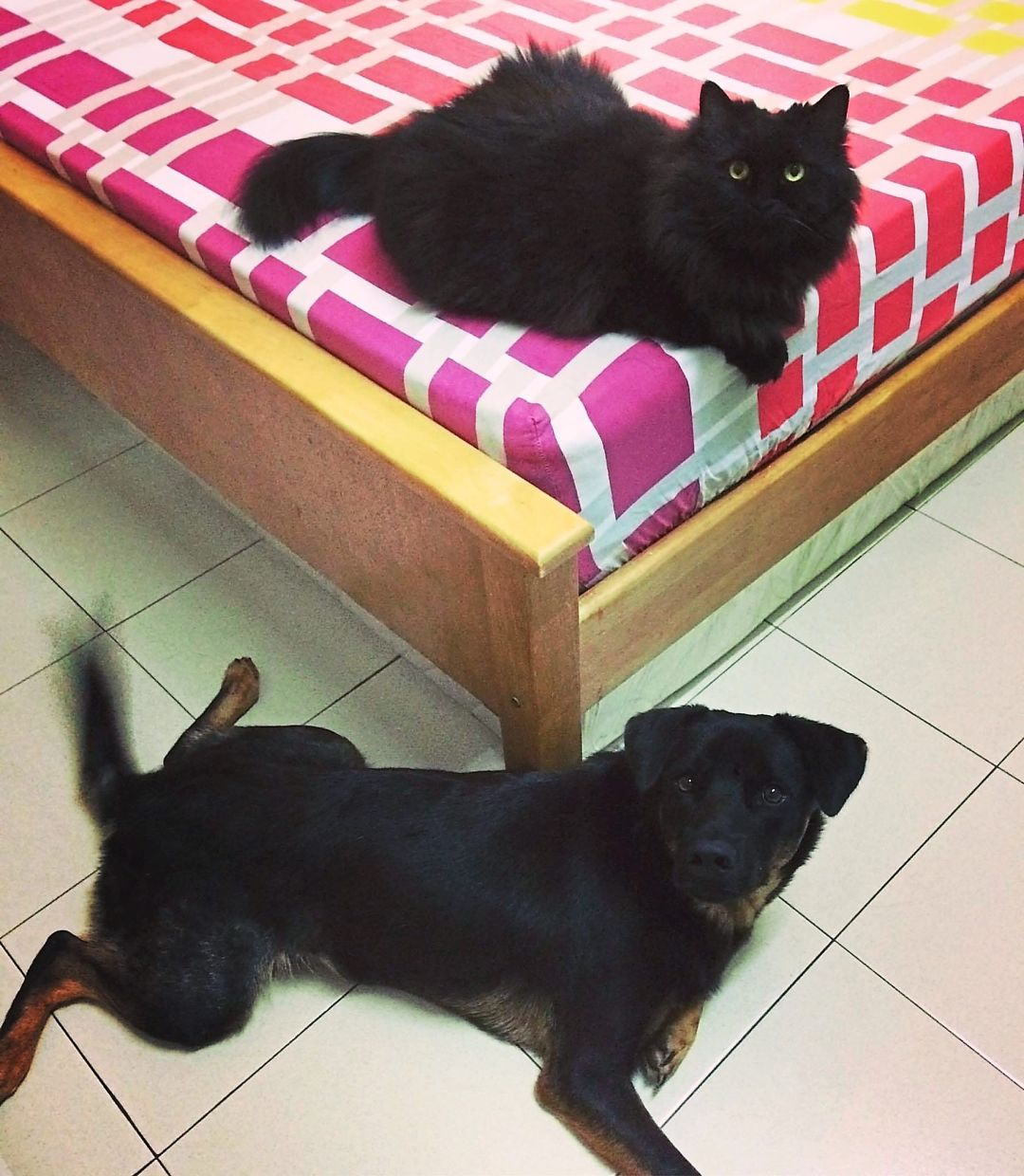 Roque the dog and Msquare the cat are best friends. — Brenda Sim