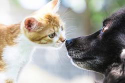 Dog Talk: Cats and dogs living under the same roof