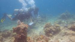 WWF-Malaysia: Those responsible for Mabul reef damage must be held accountable