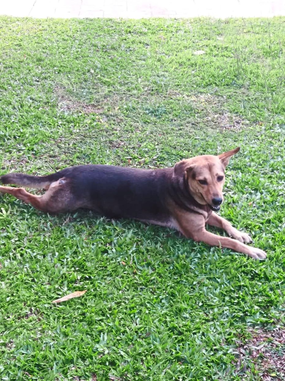 Shandy, the neighbour's dog, likes to explore the area in front of her home, and seldom strays far.