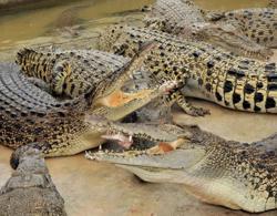 Good response to Taiping Zoo and Night Safari virtual visit