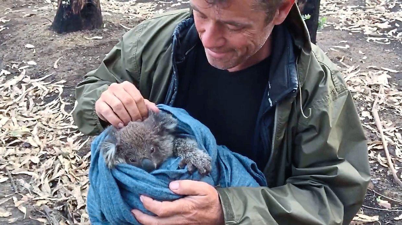 Doug Thron rescued this koala after the devastating Australian bushfires.