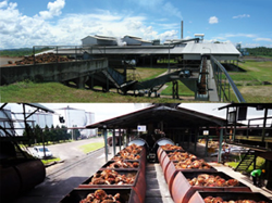 Boustead said to mull options for palm oil unit