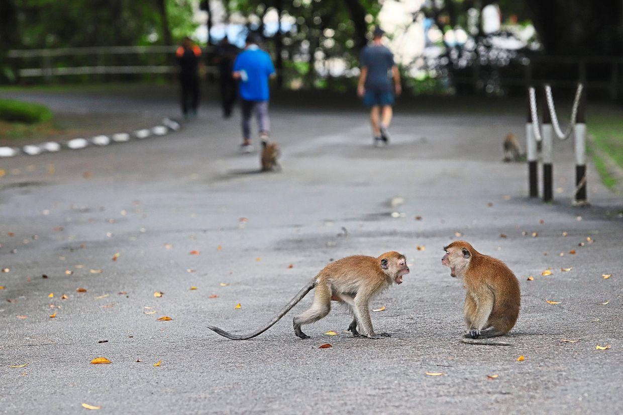 Two monkeys facing off at the City Park.