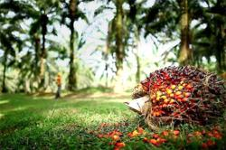 Boustead considering options for palm oil unit