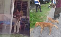 Animal lovers up in arms after abuse of two-month-old puppy