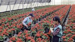 Vietnam e-commerce platform offers agricultural products