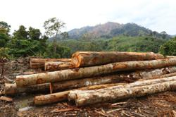 Allow timber supply chain to operate, says Malaysian Furniture Council