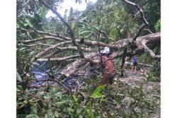 Fallen tree blocks access road in Balik Pulau