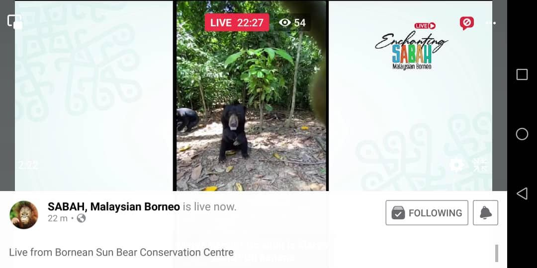 Some of the sun bears being fed during the live session on site of Bornean Sun Bear Conservation Centre in Sandakan, to kickstart Sabah Tourism Board's 'Enchanting Sabah Live' series on Tuesday.