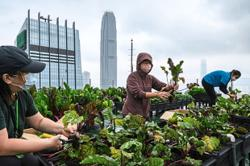 Hong Kong's urban farms are sprouting gardens in the sky