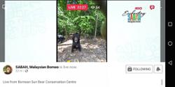 Sabah sun bear centre goes virtual to stay afloat